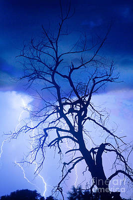 Lightning Tree Silhouette Portrait Art Print by James BO  Insogna