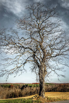 Photograph - Lightning Tree by Wayne King