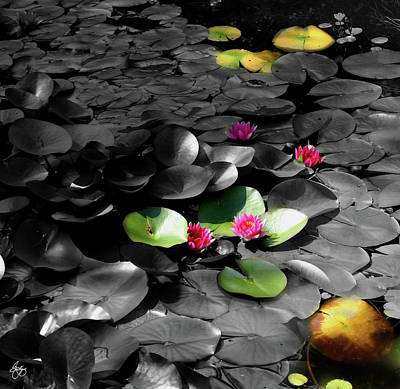 Photograph - Lightplay On Water Lilies No 1 by Wayne King