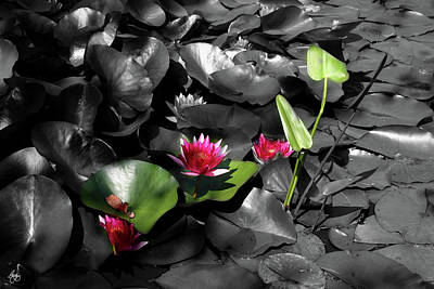 Photograph - Lightplay On Water Lilies No 2 by Wayne King
