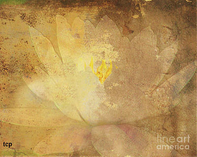 Art Print featuring the photograph Lights On Lily by Traci Cottingham