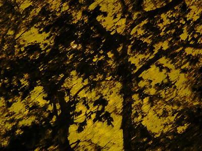 Lighttthru Forest Art Print by Florene Welebny