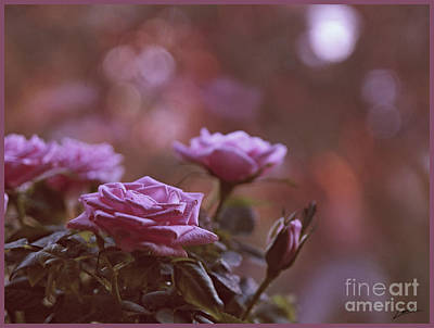 Photograph - Like A Fine Rosie Of Pastels by Lance Sheridan-Peel