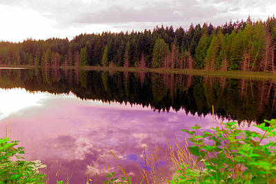 Coastal Forest Photograph - Like A Mirror by Jeff Swan