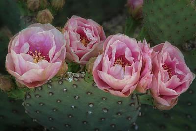 Photograph - Like A Rose In The Desert  by Saija Lehtonen