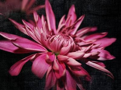 Purple Flowers Digital Art - Like A Star by Cathie Tyler