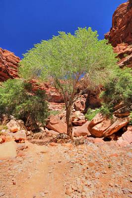 Canyon Mixed Media - Like A Tree - Keep Growing by Lori Deiter