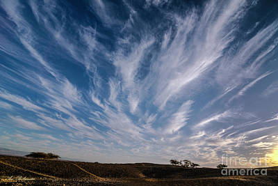 Photograph - Like Feathers In The Sky by Arik Baltinester