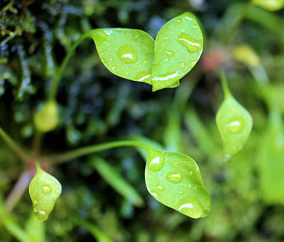 Forest Floor Photograph - Like Little Chalices  by Jeff Swan