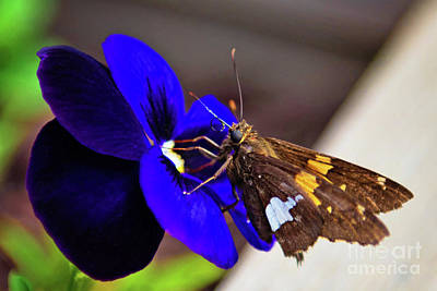 Bath Time Rights Managed Images - Moth Into Flame Royalty-Free Image by Anna Serebryanik