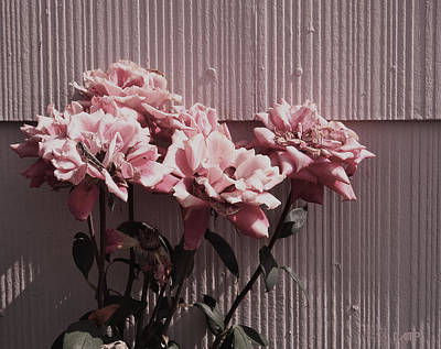 Photograph - Like The Fading Roses by David Pantuso