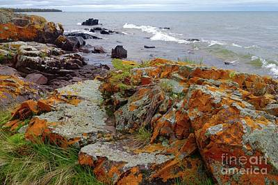 Photograph - Liking The Lichens by Sandra Updyke