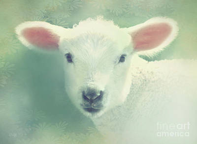 Lil Lamb Art Print by KaFra Art