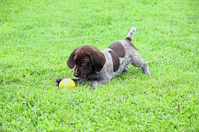 Photograph - Lil One With Ball by Brook Burling