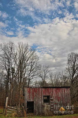 Photograph - Lil Red by Randy Rogers