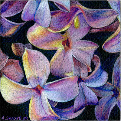 Lilac Drawing - Lilac 1 by Audi Swope