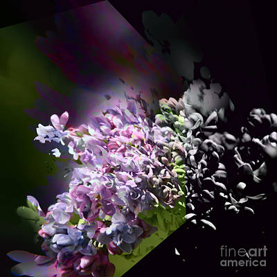 Lilac 2 Art Print
