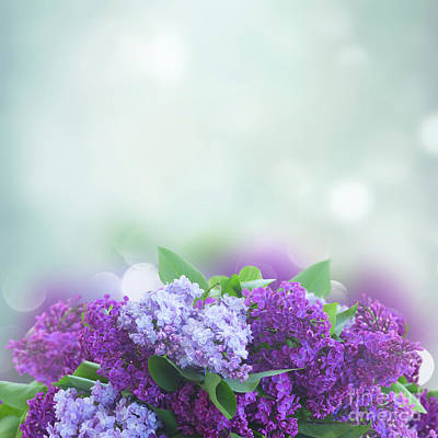Photograph - Lilac And Blue Harmony by Anastasy Yarmolovich