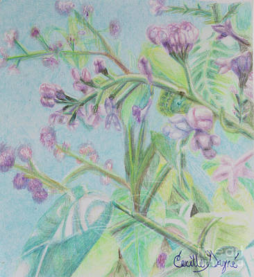 Lilac Drawing - Lilac Awakening by Cecille Gagne