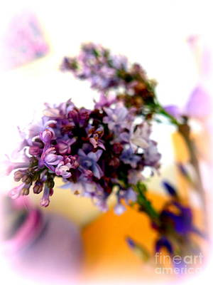 Photograph - Lilac Beauty by Marlene Rose Besso