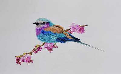Lilac Drawing - Lilac Breasted Roller by Biophilic Art