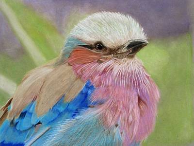 Lilac Drawing - Lilac-breasted Roller by Lori Hanks