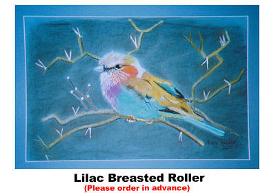 Lilac Breasted Roller Original