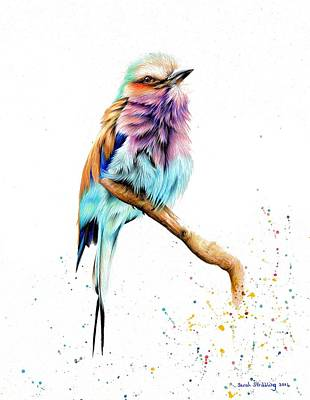 Lilac Drawing - Lilac Brested Roller by Sarah Stribbling