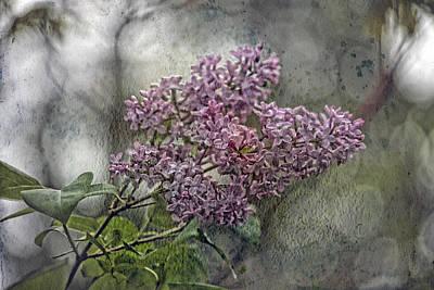 Lilac Echo Art Print by Bonnie Bruno