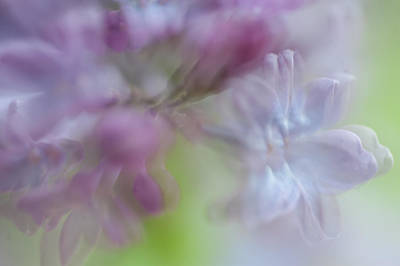 Lilac Time Photograph - Lilac Floral Abstract. Watercolors Series by Jenny Rainbow