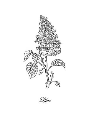 Florals Drawings - Lilac Flower Botanical Drawing Black And White by Irina Sztukowski