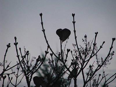 Art Print featuring the photograph Lilac Heart by Judyann Matthews