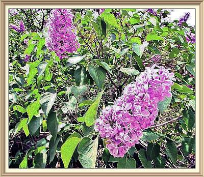 Photograph - Lilac In Spring by Marilyn Diaz