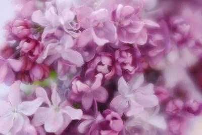 Photograph - Lilac - Lavender by Diane Alexander