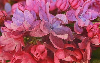 Photograph - Lilac Blush by Diane Alexander
