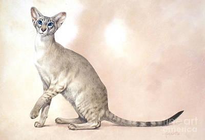 Pets Digital Art - Lilac Point by John Francis