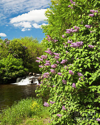 Photograph - Lilac Scenic by Alan L Graham