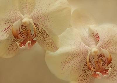 Photograph - Lilac Speckled Cream Orchids by Shabby Chic and Vintage Art