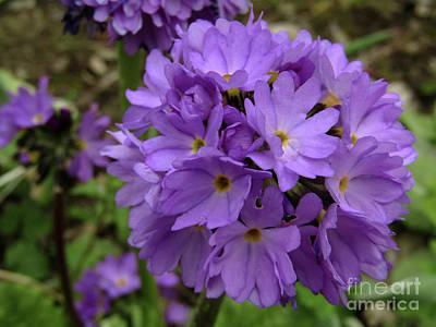 Lilac Spring 2 Art Print