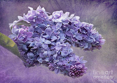 Photograph - Lilac Spring by Barbara McMahon