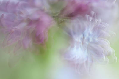 Lilac Time Photograph - Lilac. Spring Vibrations by Jenny Rainbow