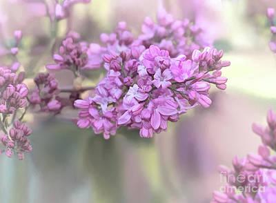 Photograph - Lilac by Susan Warren
