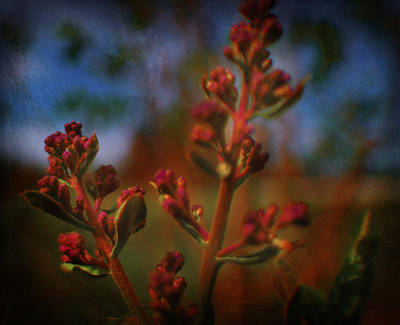 Photograph - Lilac by Theresa Pausch
