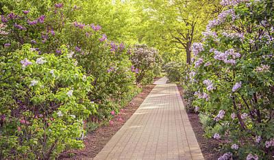 Photograph - Lilacia Park Pathway by Joni Eskridge
