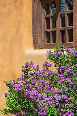 Lilacs And Adobe Art Print by Catherine Sherman