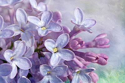 Photograph - Lilacs by Cindi Ressler