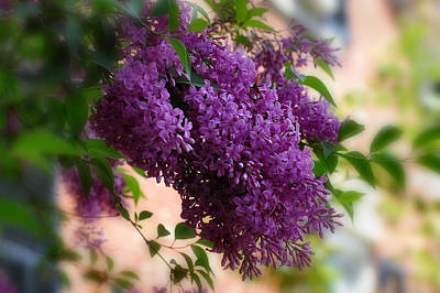Art Print featuring the photograph Lilacs by Elaine Manley