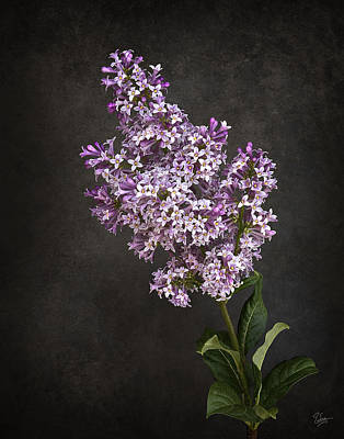 Photograph - Lilacs by Endre Balogh