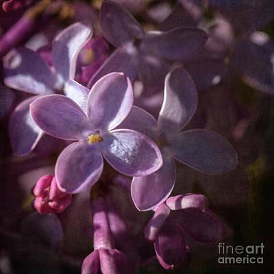 Photograph - Lilacs II by Tamara Becker