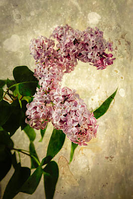 Animal Watercolors Juan Bosco - Lilacs in Bloom by Erin Cadigan